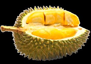 durian durian 300x211 Durian Durian Malaysia
