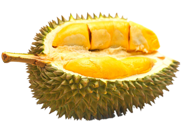 durian durian HOME